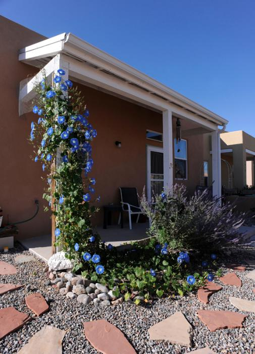 Blue flowers accenting home